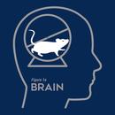 Mouse Wheel Brain