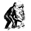 Top Evolution T-shirts
